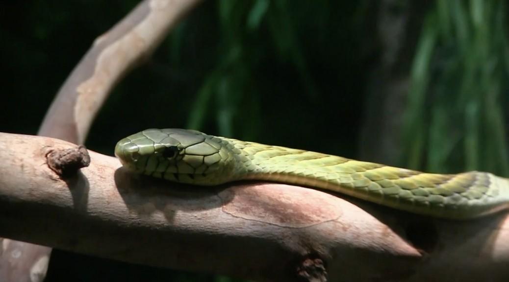 la-zoo-snake