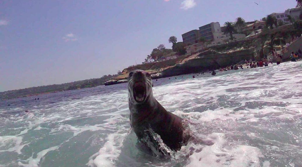 Sea Lion at La Jolla Cave
